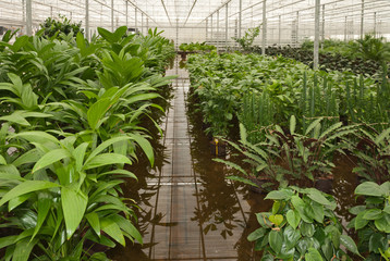 Varied house plants in a hydroculture plant nursery
