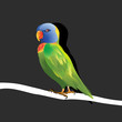 lovebird on a tree black background concept