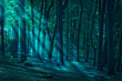 canvas print picture - Wald_01