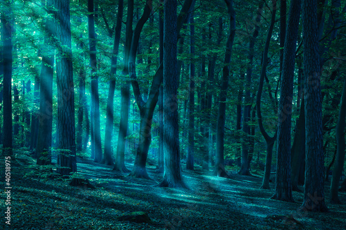 canvas print picture Wald_01