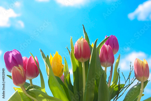 Bunte Tulpen - Colorful Tulips