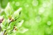 blossomed buds, abstract natural backgrounds with blured bokeh