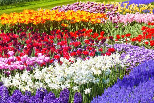 Keukenhof flowerbed