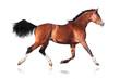 Fototapeten,tier,pferd,reiter,bellen