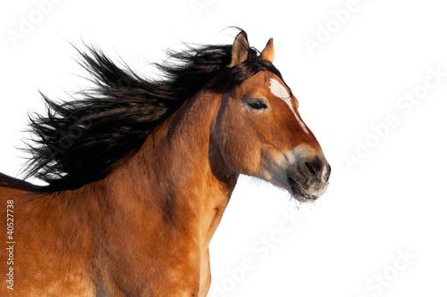 Głowa konia Bay na białym tle