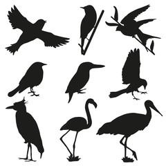Black bird silhouettes