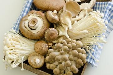 mixed mushrooms for stir fry