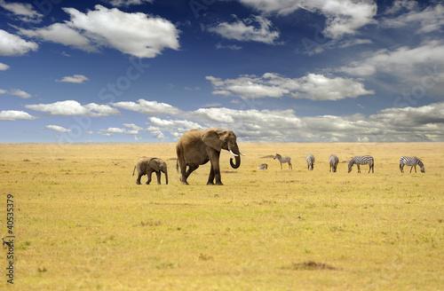 Fototapeten,afrikanisch,elefant,bull,mara