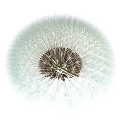 Dandelion Seeds, 3d Generated - Fibonacci Sequence Experiment