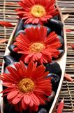 Fototapeta bambus - kąpiel - Kwiat