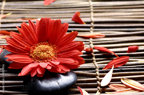 Flower with petals in the spa