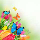 Spring flowers with exotic butterflies