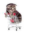 little kitten sitting in shopping cart isolated on white