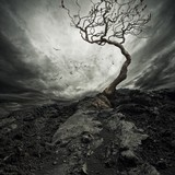 Fototapety Dramatic sky over old lonely tree.
