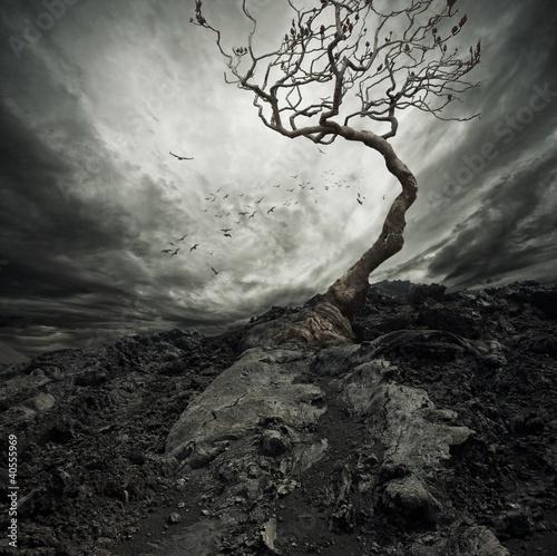dramatyczne-niebo-nad-starym-samotnym-drzewem