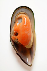 New Zealand mussel in mussel shell