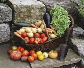 Various types of vegetables in basket with trowel