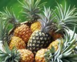 Ripe pineapples in a basket with one unripe one