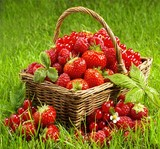 Fresh berries in a basket