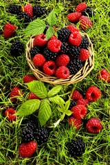 Raspberries and blackberries in a basket and in grass