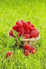 Fresh raspberries in a basket