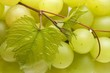 White grapes with leaves (close-up)