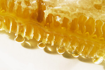 Close-up of a honeycomb