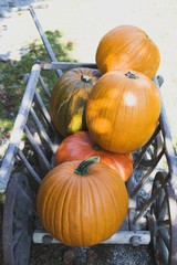 Orange pumpkins in wooden cart (outdoors)