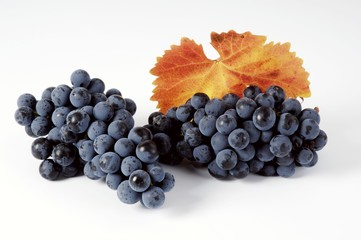 Black grapes, variety Regent, with leaf