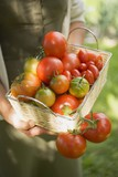 Woman holding basket of tomatoes (various types)