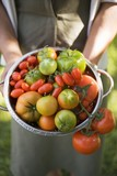Woman holding colander full of various types of tomatoes