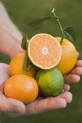 Hands holding assorted citrus fruit