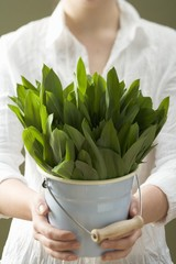 Woman holding bucket of fresh ramsons (wild garlic)