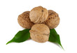 Walnuts with green leaves