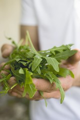 Hands holding fresh rocket leaves
