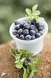 Blueberries in plastic tub
