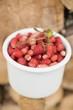Wild strawberries in tub