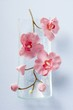 Stem of pink orchids in glass dish