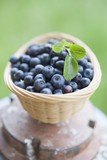 Blueberries with leaves in basket