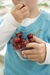 Child eating fresh cherries