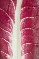 Radicchio leaf (full-frame)