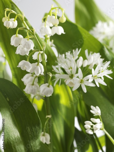 Ramsons and lily of the valley, flowering