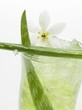 Aloe vera juice with ice cubes (close-up)