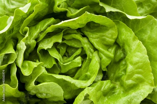 Fresh lettuce (overhead view)