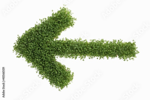 An arrow in cress