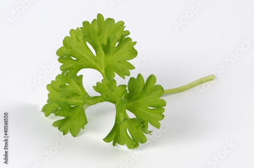 A curled parsley leaf