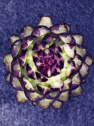 A purple artichoke