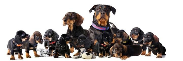 big dog family