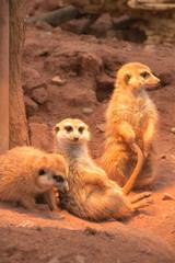 Thüringer Zoopark