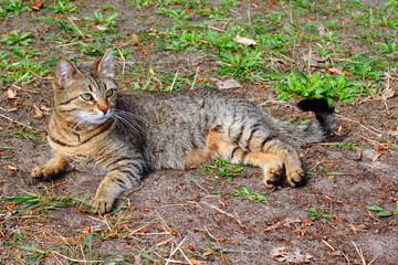 Brown mongrel cat looking away